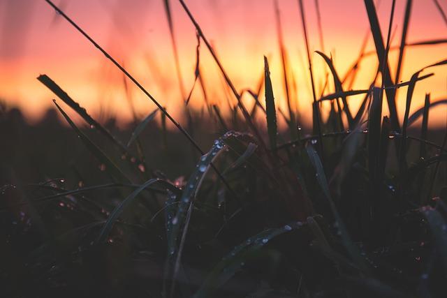 Blur, Close-up, Dawn, Dewdrops, Dusk, Grass, Macro