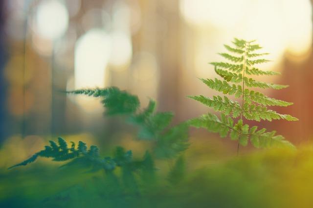 Forest, Light, Fern, Macro, Mood, Bokeh, Blur, Plant