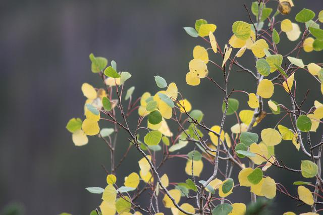 Green, Yellow, Gold, Leafs, Nature, Colorful, Blur