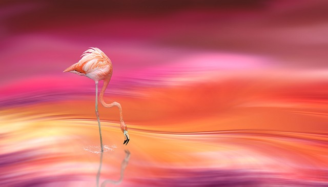 Digital Art, Flamingo, Blur, Blurred Type, Blurred