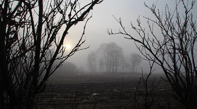 Fog, Natural, Blushing Morning There Was Moonlight