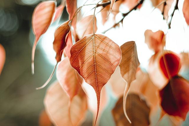 Bo Leaf, Bo Tree, Bodhi, Bopath, Leaf, Leaves, Bo, Tree
