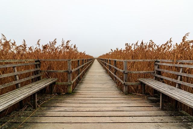Spring Lake, Web, Boardwalk, Mood, Landscape, Railing