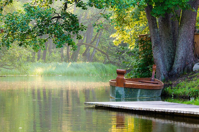 Nature, Water, Tree, Wood, Boat, Leaf, Landscape, Light