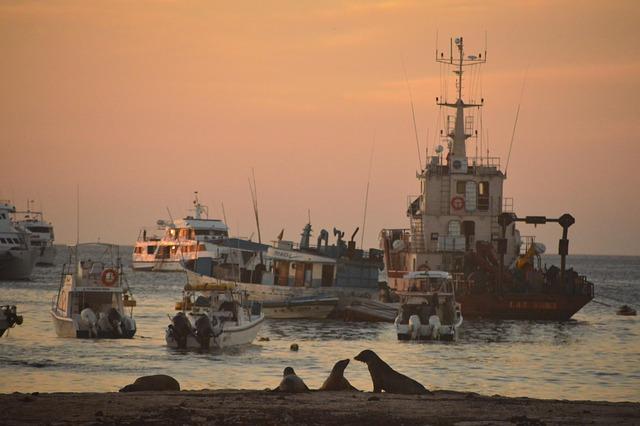 Landscape, Sunset, Sea lions, Boats