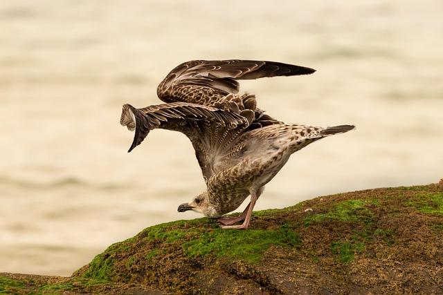 Bird, Nature, Fauna, Body Of Water, Animal, Seagull