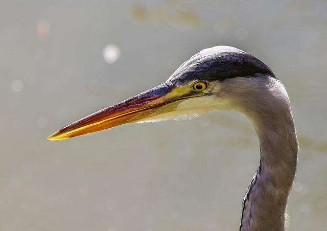 Bird, Fauna, No Person, Nature, Body Of Water, Heron