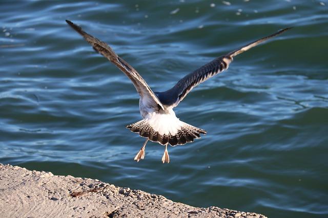 Birds, Body Of Water, Nature, Outdoors, Wildlife, Mar