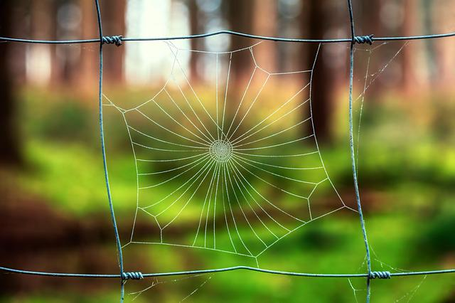Nature, Cobweb, Spider, Dew, Grid, Green, Bokeh, Close