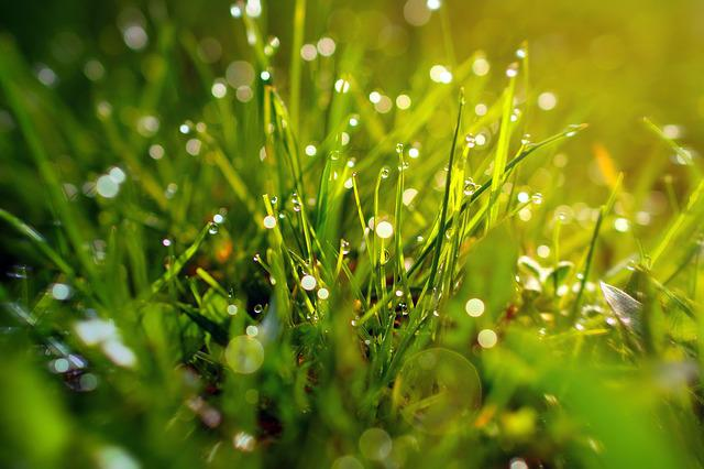 Grass, Bokeh, Green, Plant, Nature, Leaf, Spring, Macro