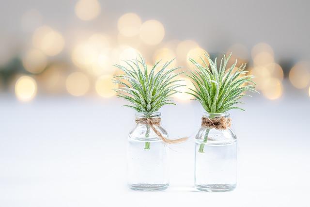 Plants, Bokeh, Close Up, Vegetable, Green, Nature