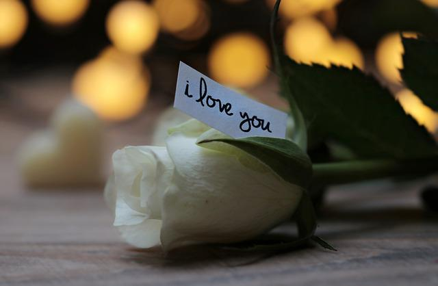 Rose, Bokeh, Love Message, I Love You, White Rose