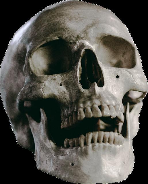 Skull, Skeleton, Head, Death, Human, Anatomy, Bone