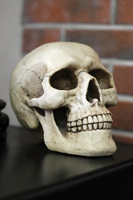 Skull, Human Head, Teeth, Bones, Head, Human, One