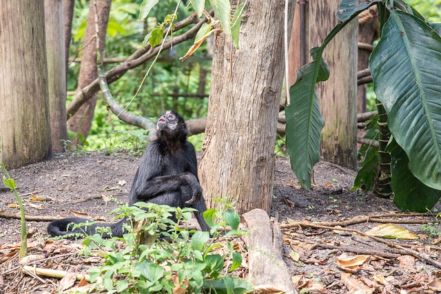 Bonobo, Mammal, Animal, Monkey, Wildlife, Ape, Nature