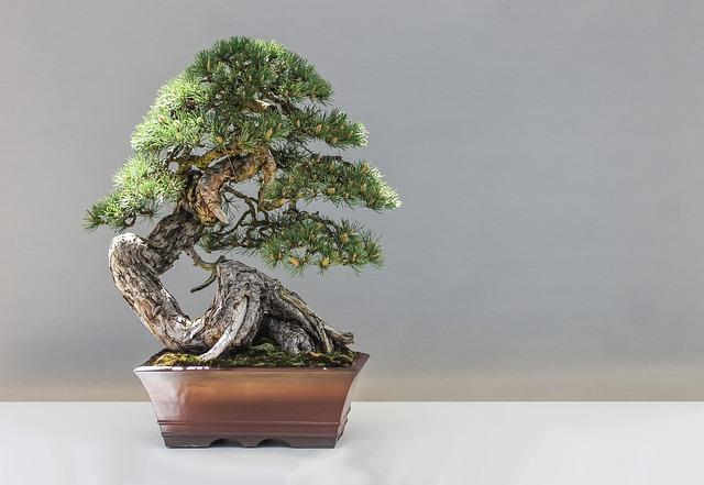 Bonsai, Pine, Plant, Culture, Artistic
