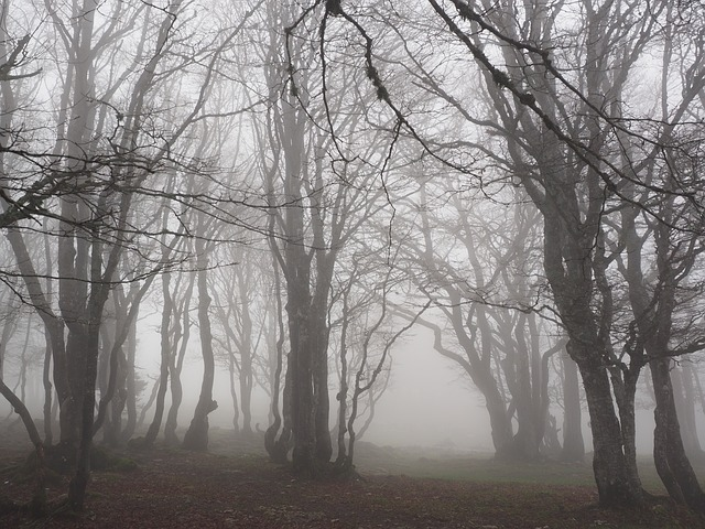 Beech Wood, Fog, Forest, Trees, Tree Trunks, Book