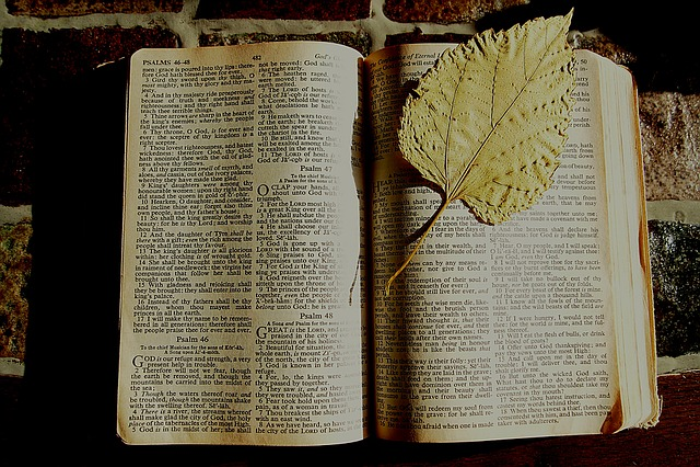 Bible, Bookmark, Dried Leaf, Book, Christian, Faith