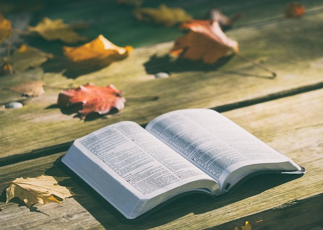 Bench, Bible, Book, Dry Leaves, Knowledge, Pages