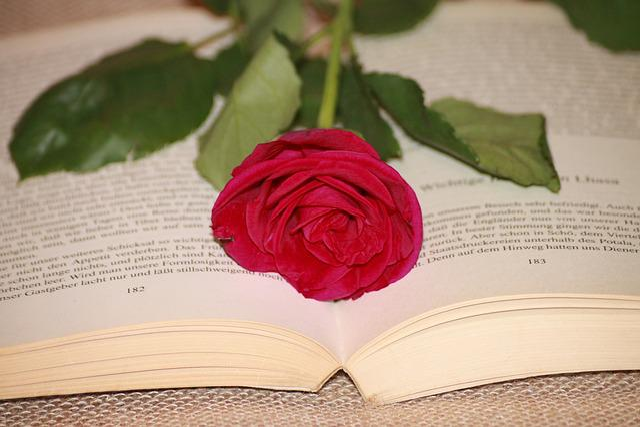 Book, Read, Rose, Red, Red Rose, Literature