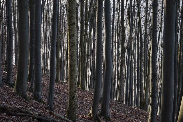 Beech Wood, Strains, Beech Logs, Close Close, Book