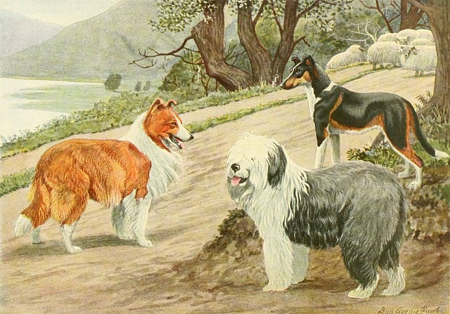 Border Collie, Dog Trio, Dog