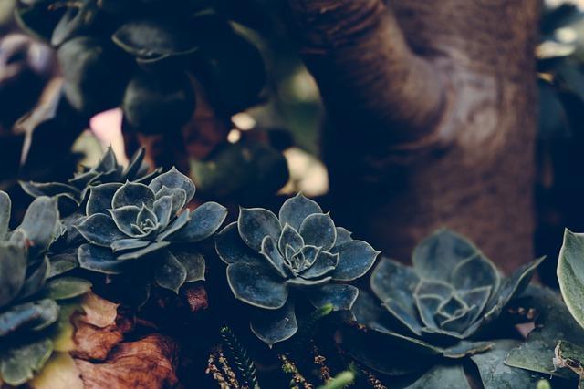 Plant, Succulents, Botanical, Botany, Garden