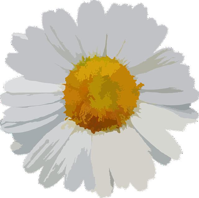 Flower, Floral, Daisy, Petals, Botanical, Flora, Botany
