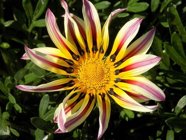 Flower, Summer, Botanical Garden