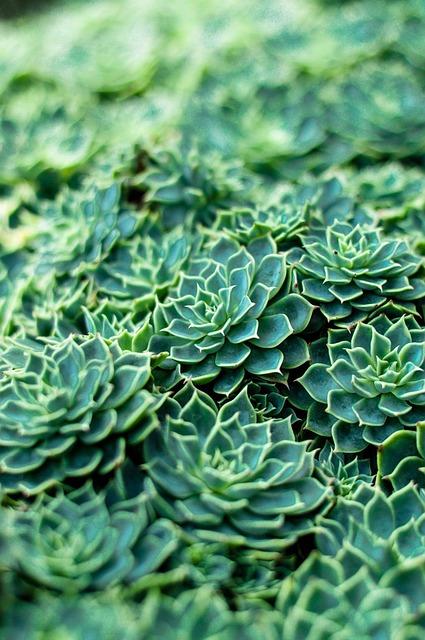 Plant, Flower, Nature, Gardening, Botanical, Leaf