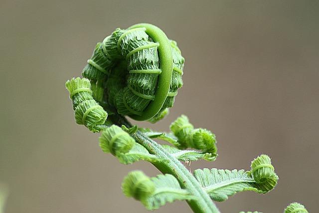 Fern, Leaf, Roll, Nature, Plant, Natural, Botanical