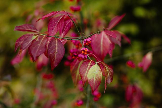 Nature, Autumn, Autumnal, Beautiful, Bokeh, Botany