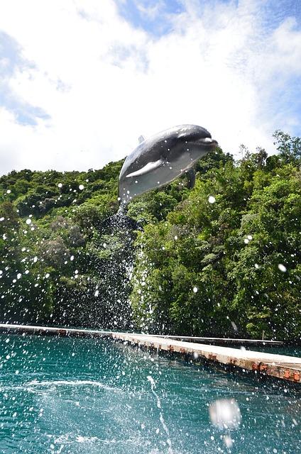 Dolphin, Jumping, Spectacular, Trick, Bottlenose, High