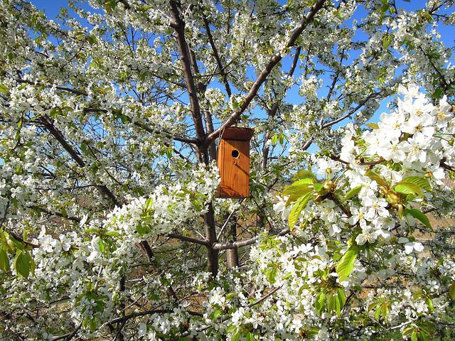 Flowering Tree, Bough, Bird's Lair, Bird House, Odu