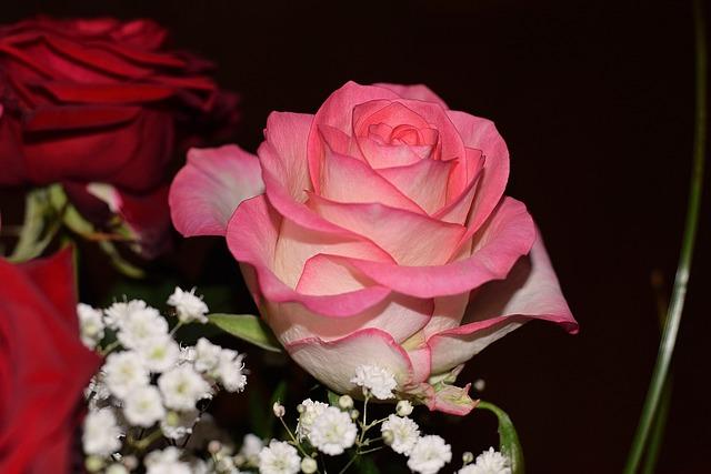 Rose, Blossom, Bloom, Petals, Bouquet