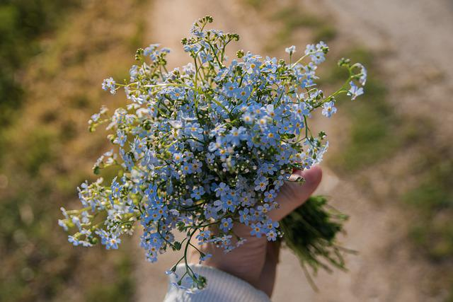 Me-nots, Bouquet, Hand, Summer, Blue, Flower, Flowers