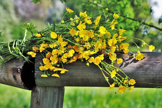 Spring, Bouquet, Nature, Flower, Plant, Leaf, Garden