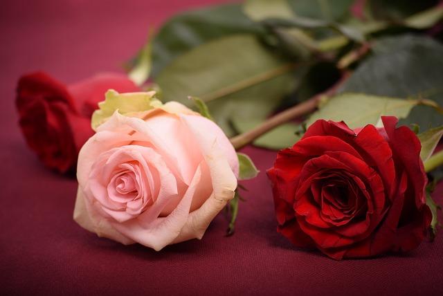 Rose, Flower, Petal, Love, Wedding, Romance, Bouquet