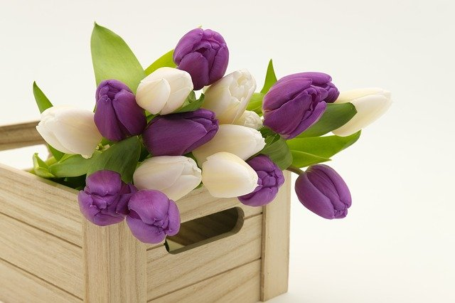 Bouquet, Tulip Bouquet, Tulips, Flowers, Box