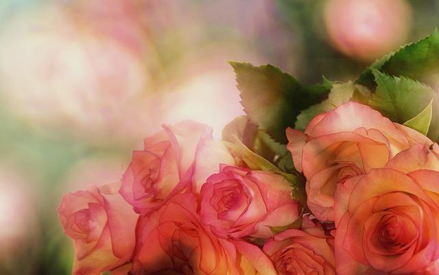 Roses, Bouquet Of Roses, Flower, Romantic, Romance