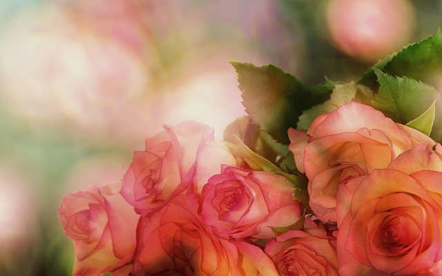Roses, Bouquet Of Roses, Flower, Romantic, Romance