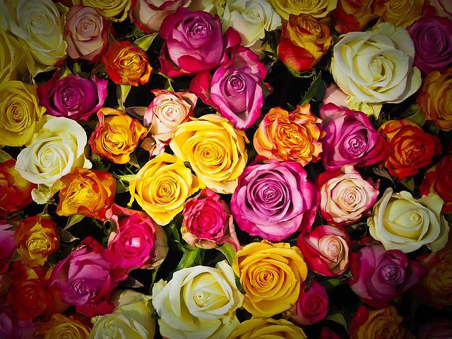 Roses, Bouquet Of Roses, Bouquet, Flowers, White, Pink