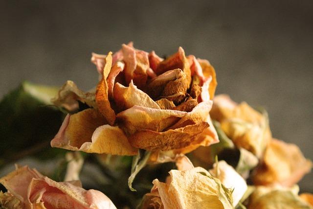 Flower, Flowers, Rose, Bouquet, Dry, Fade, Wilt