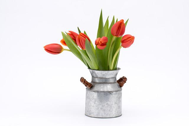 Tulip, Bouquet, Flower, Red, Vase, Plant, Still Life