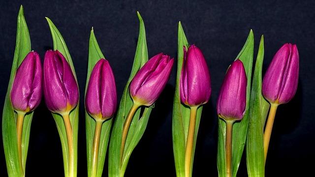 Nature, Flower, Tulip, Plant, Bouquet, Composition