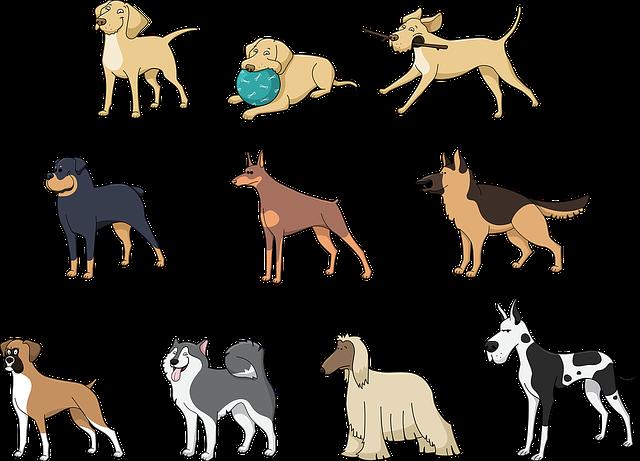 Animals, Pets, Dog, Afghan Hound, Boxer, Doberman