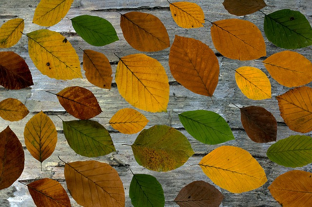 Leaves, True Leaves, Boxer Shorts, Colorful, Background