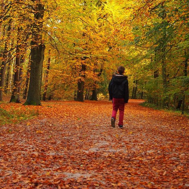 Boy, Forest, Avenue, Landscape, Walking Path, Walk