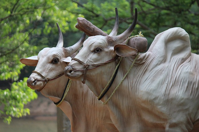 Brahma, Cattle, Sculptures, Bulls, Farming, Animals