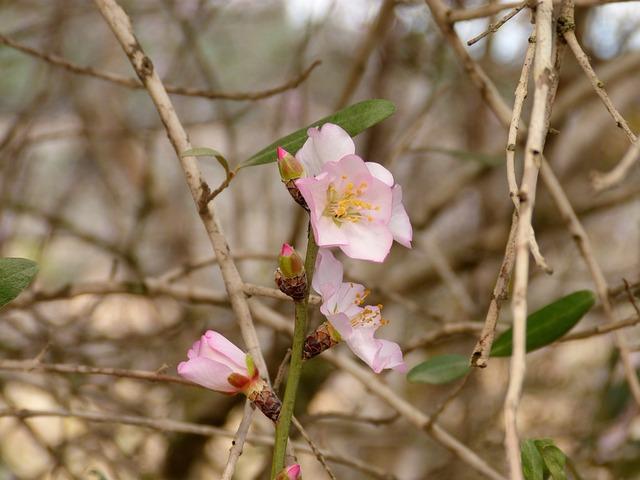 Flower, Plant, Nature, Tree, Branch, Almonds, Almond